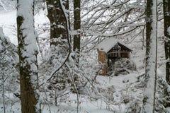 小屋在雪盖的森林里 免版税库存照片