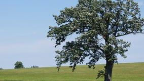 小山一结构树 免版税库存照片