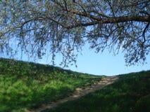 小山上缘和紫皮柳树在蓝天在春天分支 库存照片