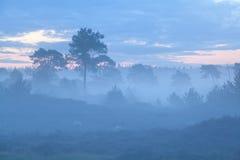 小山和树在有雾的黄昏 免版税库存图片