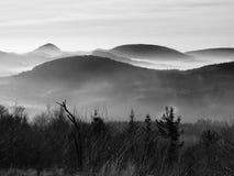 小山和树峰顶从薄雾黄色和橙色波浪非常突出。第一太阳光芒。黑白照片 免版税库存图片