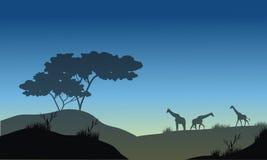 小山和长颈鹿剪影  库存照片