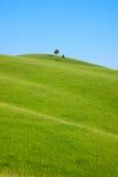 小山唯一立场结构树 免版税图库摄影