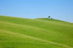 小山唯一立场结构树 免版税库存照片
