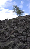 小山岩石结构树 免版税库存照片
