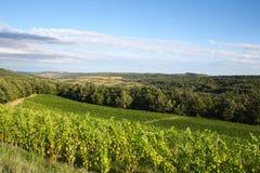 小山晴朗的葡萄园 库存照片