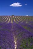 小山淡紫色普罗旺斯 库存图片