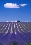 小山淡紫色普罗旺斯 免版税库存照片