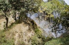 小山的充满烟雾的森林 免版税图库摄影