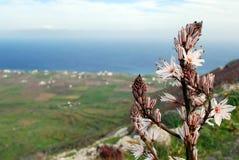 从小山的圣托里尼海岛 免版税库存图片