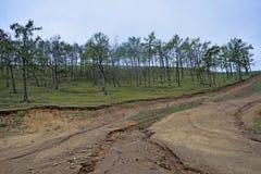 小山的森林 库存照片