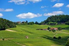 小山的绿色葡萄园在蓝天下 库存图片