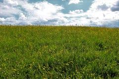 小山的草甸与在天际的云彩 库存照片