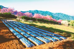 小山的菜园有花场面自然背景 免版税图库摄影
