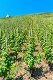 小山的葡萄园沿摩泽尔河 免版税库存照片