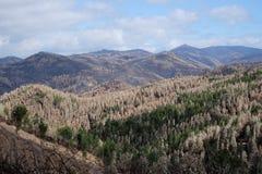 小山的被烧的森林 图库摄影