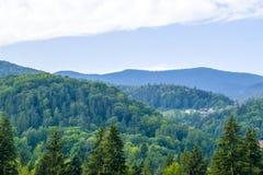 小山的议院由森林 免版税库存照片