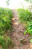 小山的道路在公园 背景,自然 库存图片