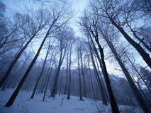 小山的黑暗的冬天森林 在山峰的树 免版税库存照片