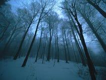 小山的黑暗的冬天森林 在山峰的树 库存图片