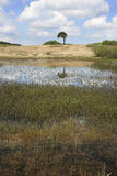小山顶池塘在萨默塞特 库存照片