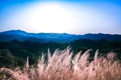 小山风景 免版税库存图片