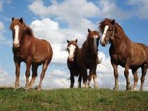 小山马横向牧场地夏天 库存图片