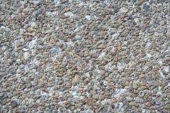 小岩石和壳 免版税图库摄影