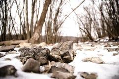 小岩石在雪森林里 库存图片