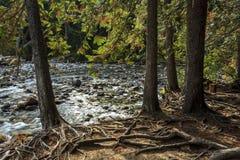 小岩石小河在加拿大 免版税库存图片