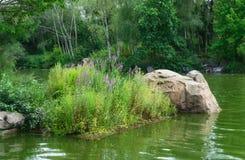 小岩质岛在有花和草的一个湖 库存照片