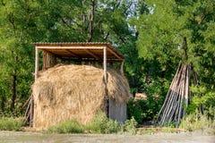 小干草堆在有绿色森林的一个机盖下背景的 收获为哺养的动物的秋天在冬天 库存照片