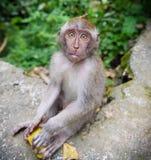 小幼小猴子 免版税库存照片