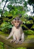 小幼小猴子 库存照片