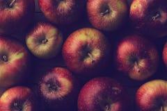 小庭院成熟苹果纹理的顶视图关闭  库存照片