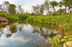 小庭院池塘 库存照片