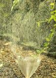 小庭院灌溉顶头飞溅的水 库存照片