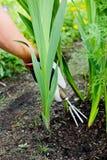 小庭院的犁耙 库存照片