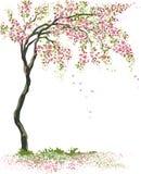 小开花的树 向量例证