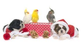 小形鹦鹉和狗在箱子 库存图片