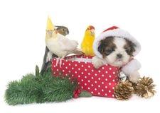 小形鹦鹉和狗在箱子 免版税库存图片