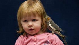 小形鹦鹉宠物 免版税图库摄影