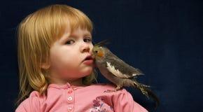 小形鹦鹉宠物 免版税库存图片