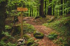 小径信号到森林里在一个雨天阿尔卑斯意大利 图库摄影