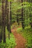 小径信号到森林里在一个雨天阿尔卑斯意大利 库存图片