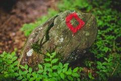 小径信号到森林里在一个雨天阿尔卑斯意大利 库存照片