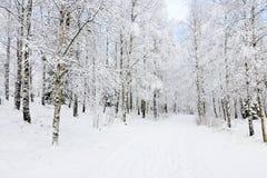 小径冬天 库存图片