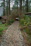 小径在松属Kalilo森林旅游区在Kaligesing Purworejo,印度尼西亚 免版税库存图片