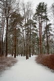 小径在一个多雪的公园 库存图片