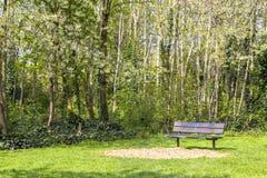 小径在一个开花的公园 绿色和开花的树 明亮的gozon 长凳在公园和开花的树  免版税图库摄影